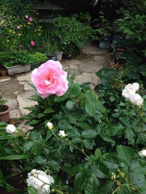Rose Garden &  Afternoon Tea_c0195496_1443954.jpg