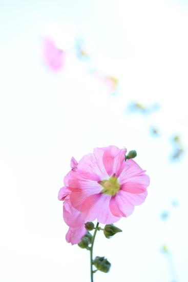 f0151200_1448414.jpg