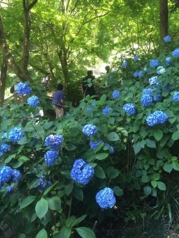 鎌倉へ_f0167026_22382723.jpg