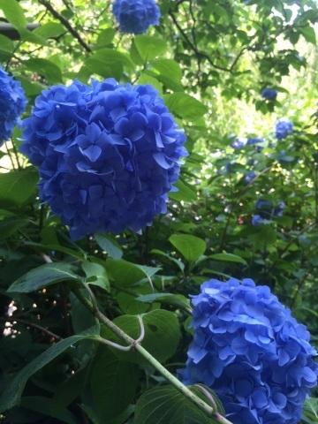 鎌倉へ_f0167026_23041634.jpg