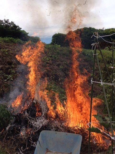 エンドウ豆の枯れ木を燃やし 成平 蔓ありいんげんの発芽確認 ナス&トマトの脇芽摘みと収穫_c0222448_14400241.jpg