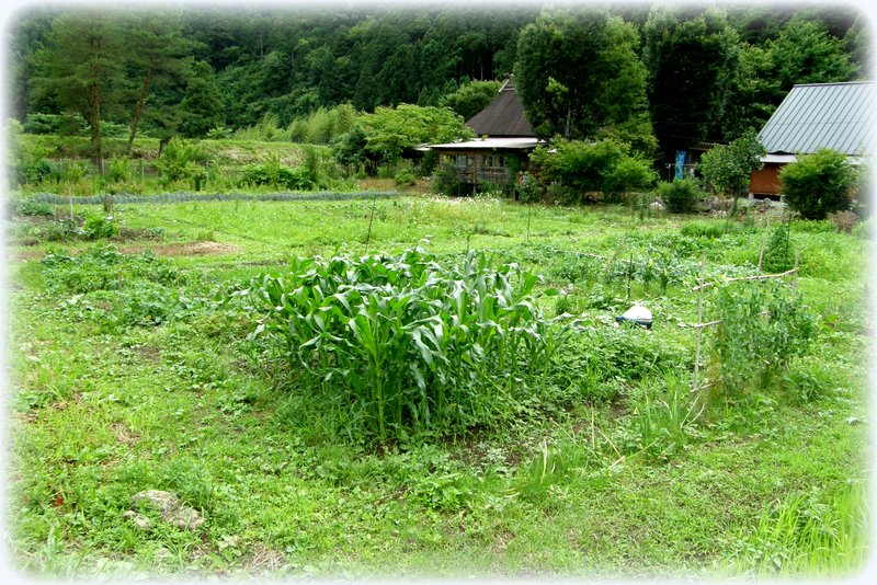 草刈り_c0057390_2135821.jpg