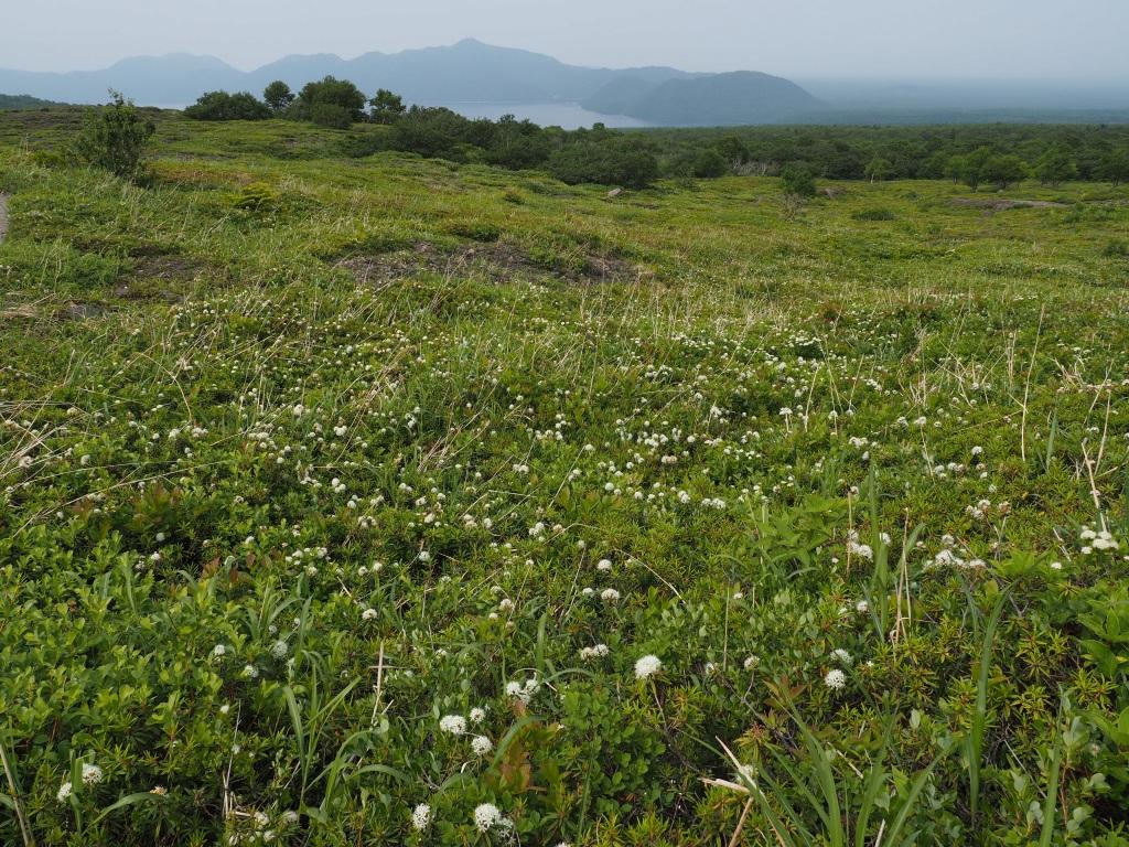樽前山と風不死岳、6月26日_f0138096_13581070.jpg