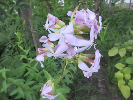 森の苺苗、ブラックベリーの実など_a0203003_19571647.jpg