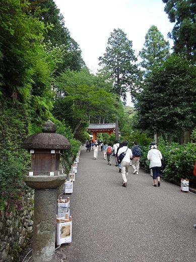 京都の紫陽花寺_c0178104_08261861.jpg