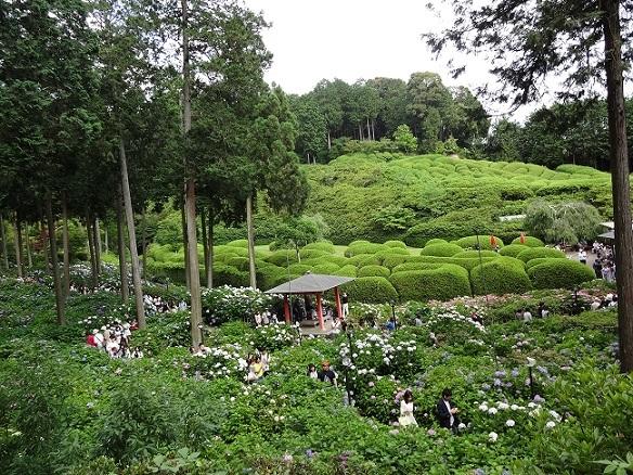 京都の紫陽花寺_c0178104_08265411.jpg