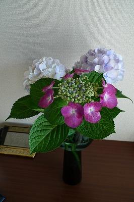 f0201348_2011371.jpg