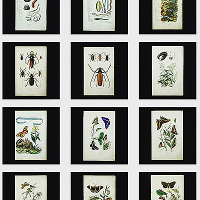 E.Geurinの博物画_f0247848_14452440.jpg