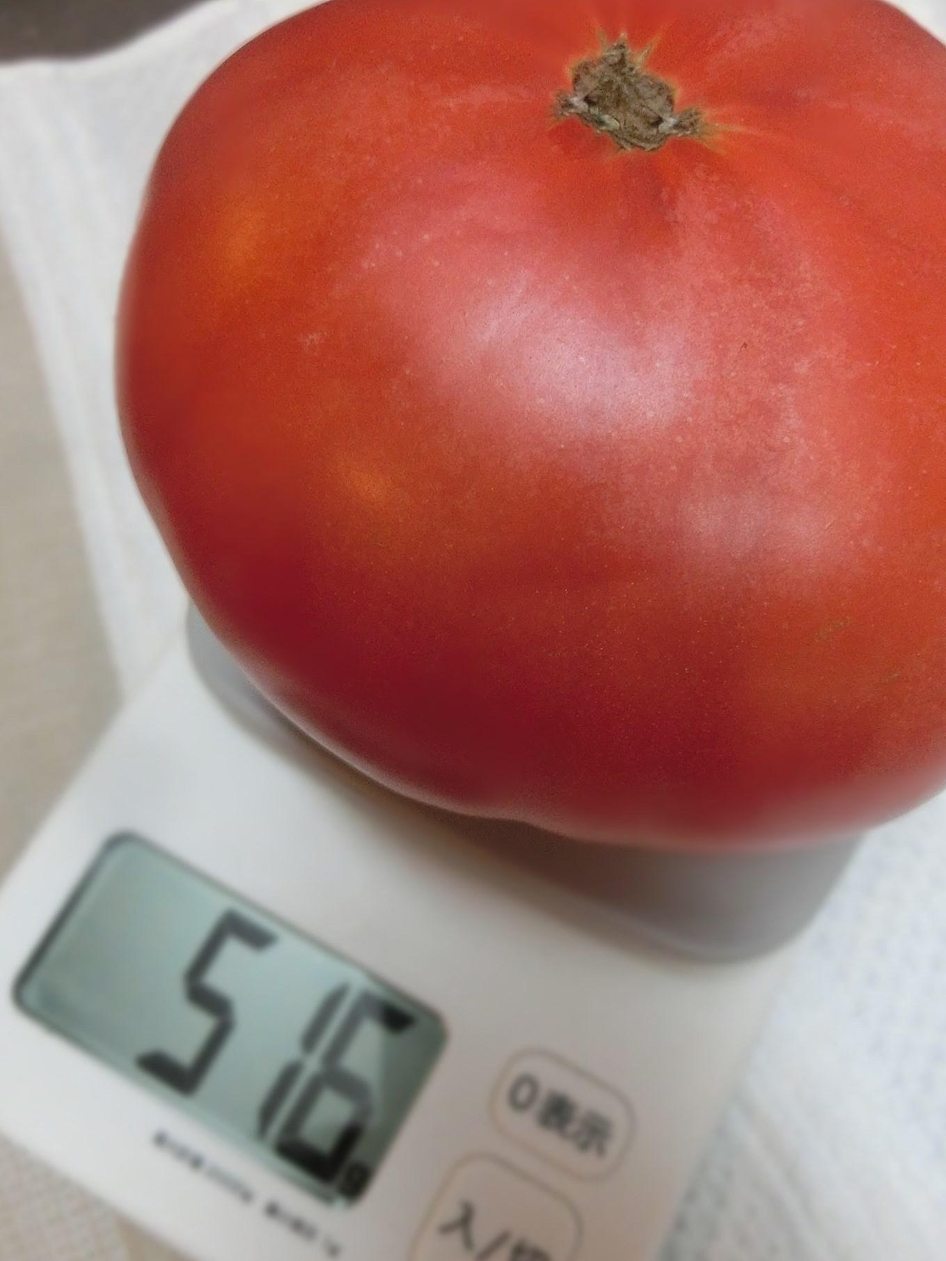 大きなトマトを醤油と砂糖で食べようかな?_e0291149_20373185.jpg