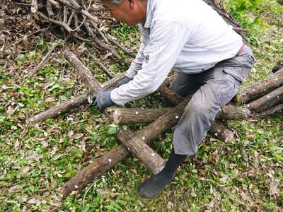 原木しいたけ 原木の本伏せ作業2015_a0254656_19353651.jpg