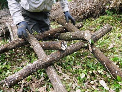 原木しいたけ 原木の本伏せ作業2015_a0254656_19385099.jpg