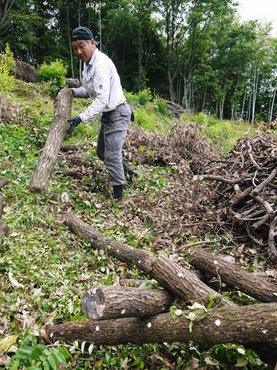 原木しいたけ 原木の本伏せ作業2015_a0254656_19452313.jpg