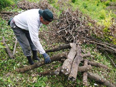 原木しいたけ 原木の本伏せ作業2015_a0254656_19545982.jpg