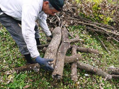 原木しいたけ 原木の本伏せ作業2015_a0254656_1954869.jpg