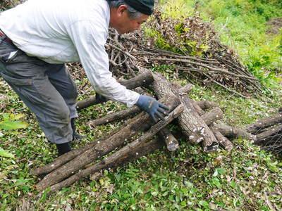 原木しいたけ 原木の本伏せ作業2015_a0254656_1959056.jpg