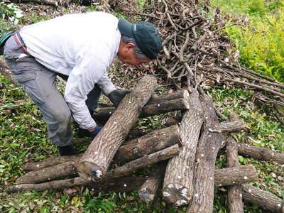 原木しいたけ 原木の本伏せ作業2015_a0254656_2032815.jpg