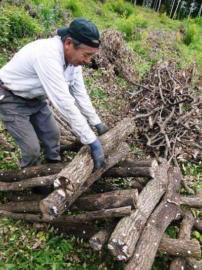 原木しいたけ 原木の本伏せ作業2015_a0254656_2083755.jpg