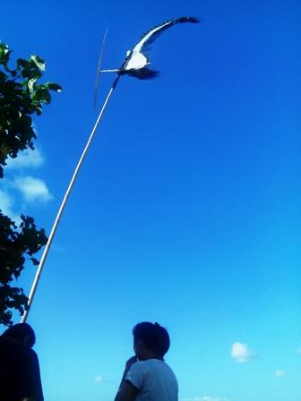 6月のバリ島(その2)_d0083068_7415271.jpg