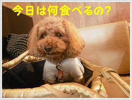 さくら、埼玉では最後のロング散歩かな_b0175688_19212950.jpg