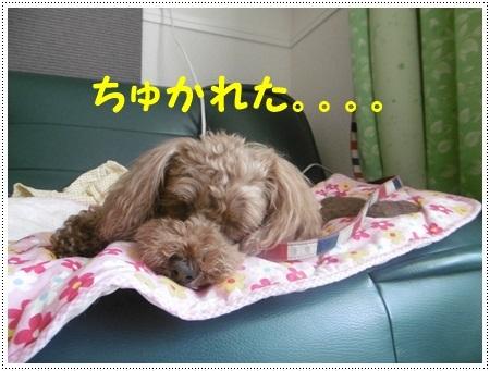 さくら、埼玉では最後のロング散歩かな_b0175688_19214776.jpg