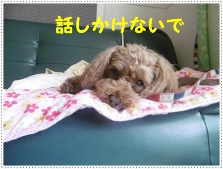 さくら、埼玉では最後のロング散歩かな_b0175688_19215022.jpg