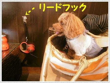 さくら、埼玉では最後のロング散歩かな_b0175688_19342085.jpg