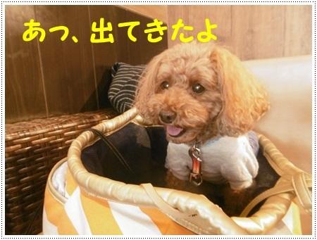 さくら、埼玉では最後のロング散歩かな_b0175688_19353413.jpg
