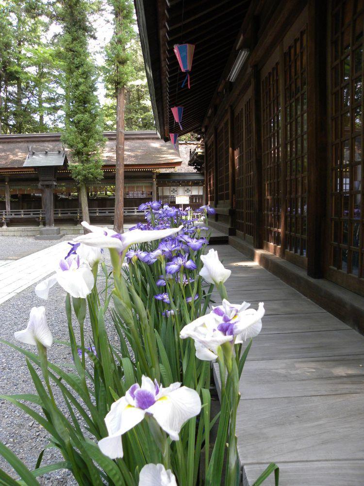 諏訪大社・春宮周辺の散歩_b0329588_18065758.jpg