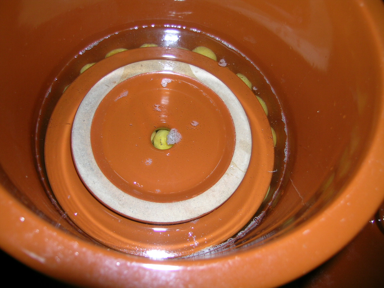 梅酵素・梅漬けに水上がる ほか_a0203003_2222819.jpg