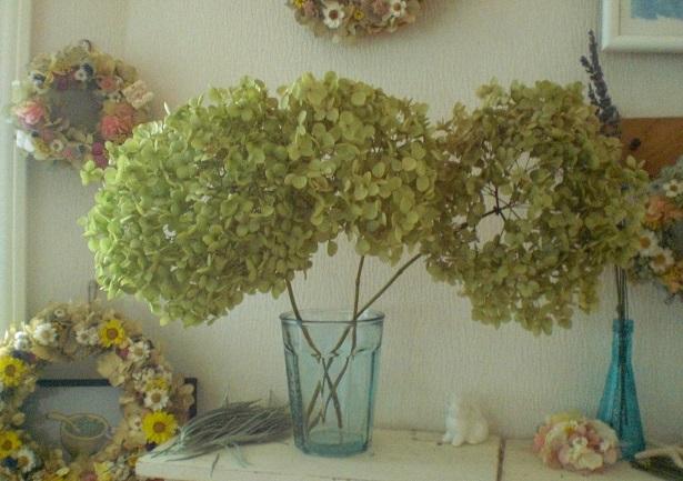 茎付紫陽花アナベル3本セット_c0207719_17511621.jpg