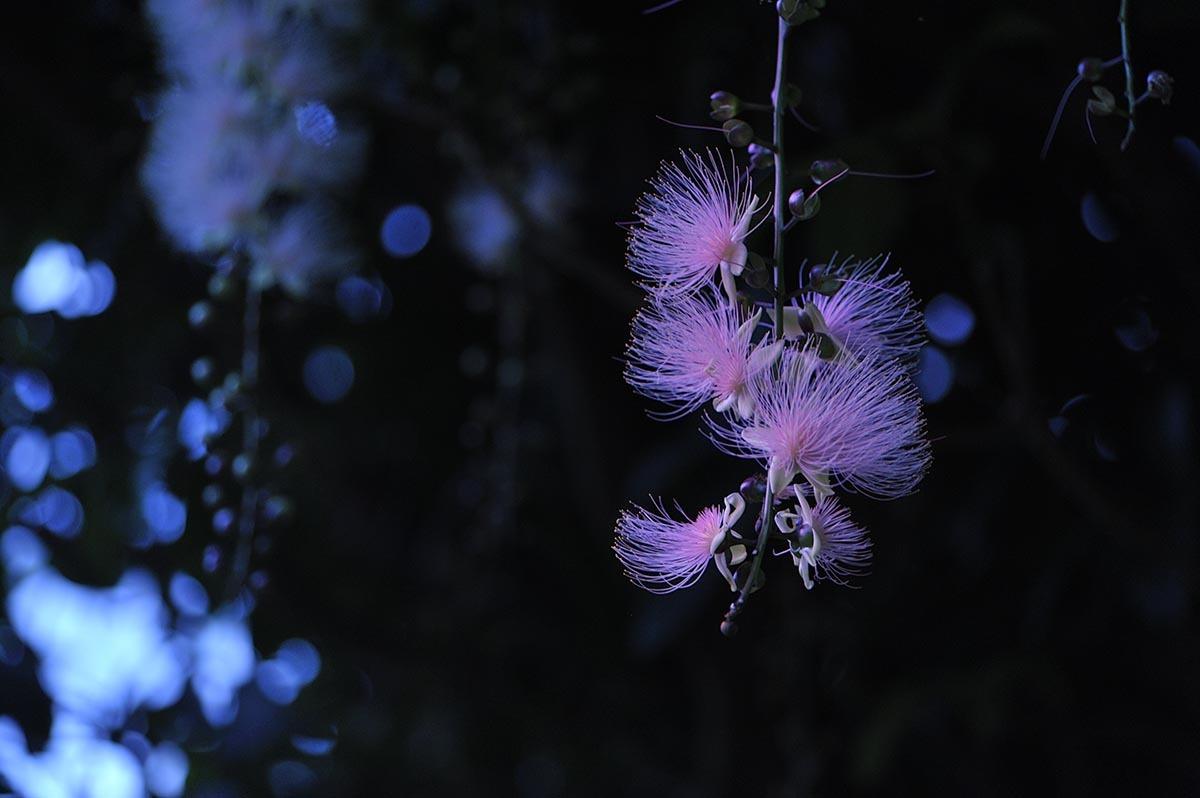 石垣島_a0059621_23231164.jpg