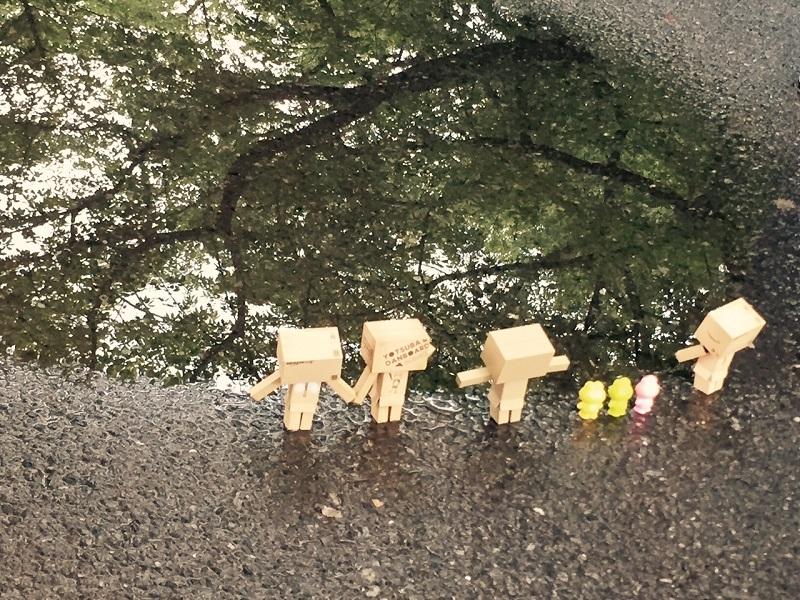 ✿にゃんこと紫陽花~谷中オフ~Ⅵ (おまけ)_b0330432_14501036.jpg