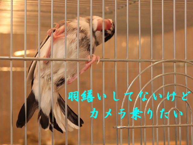 c0365734_20201841.jpg