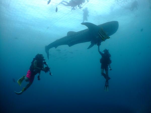 沖縄DIVE!ジンベイ&ピカチュウドリームホール_a0226058_14552974.jpg