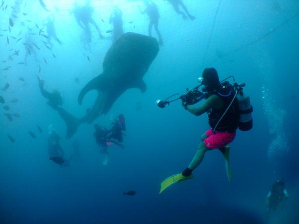 沖縄DIVE!ジンベイ&ピカチュウドリームホール_a0226058_15501090.jpg