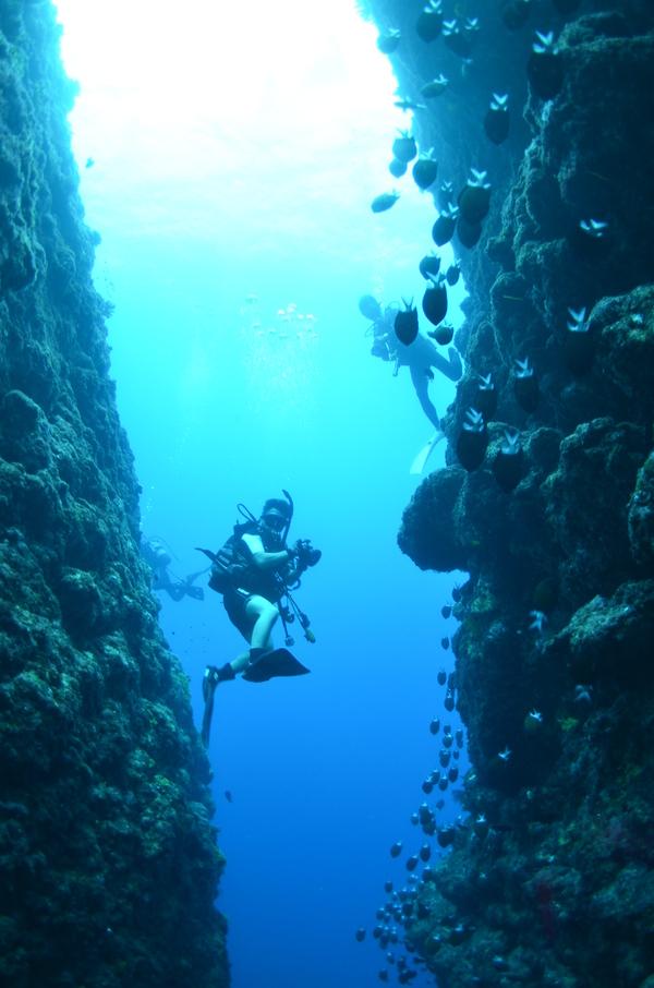 沖縄DIVE!ジンベイ&ピカチュウドリームホール_a0226058_16502821.jpg