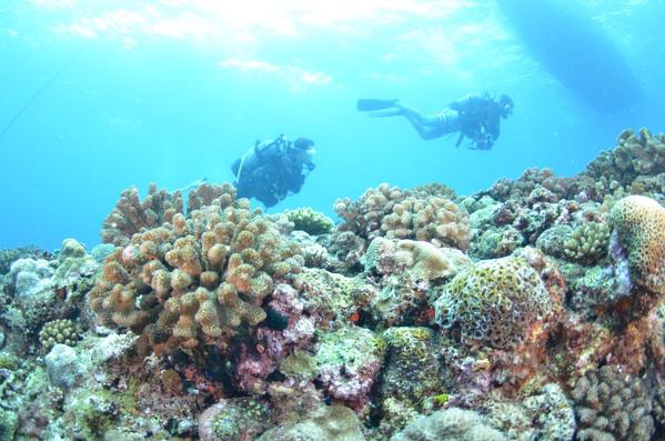 沖縄DIVE!ジンベイ&ピカチュウドリームホール_a0226058_16574795.jpg