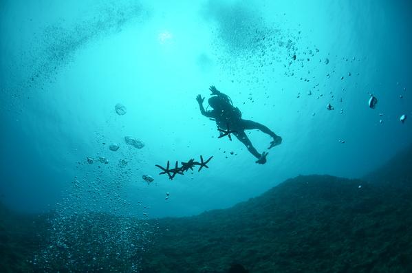 沖縄DIVE!ジンベイ&ピカチュウドリームホール_a0226058_1813563.jpg