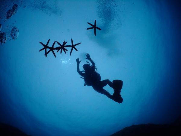 沖縄DIVE!ジンベイ&ピカチュウドリームホール_a0226058_1841258.jpg