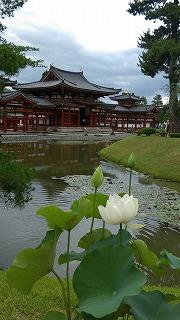 京都宇治の旅 三室戸寺・平等院へ_f0012059_8391579.jpg