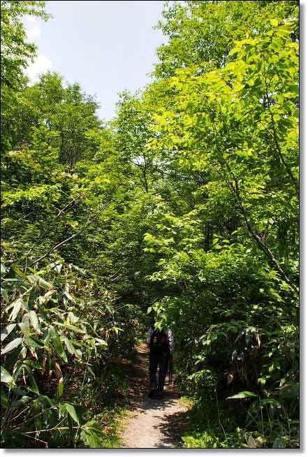 福島南会津・・・駒止湿原(1)_b0053765_19304663.jpg