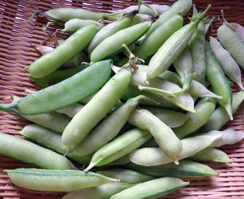 カシスの収穫と、豆ご飯を楽しんだ実エンドウの最後の収穫♪_a0136293_17284089.jpg