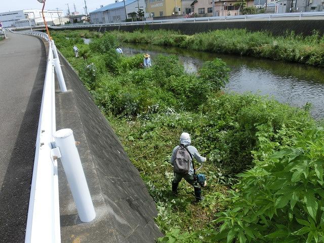 梅雨の晴れ間に小潤井川で草刈り 夜の払いはいつもの「ホルモン忠ちゃん」_f0141310_7265377.jpg
