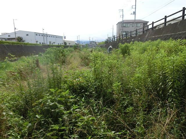 梅雨の晴れ間に小潤井川で草刈り 夜の払いはいつもの「ホルモン忠ちゃん」_f0141310_7282772.jpg