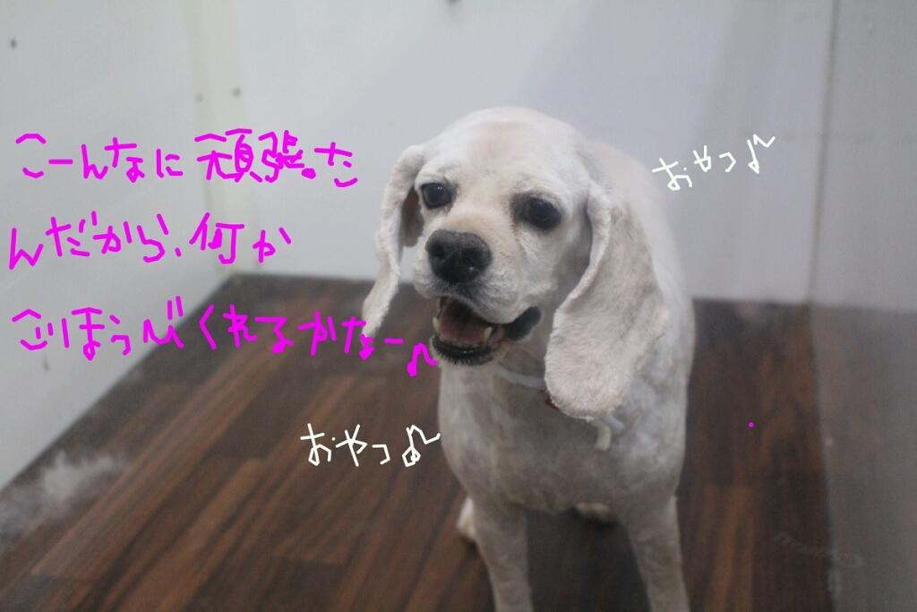 b0130018_18464329.jpg