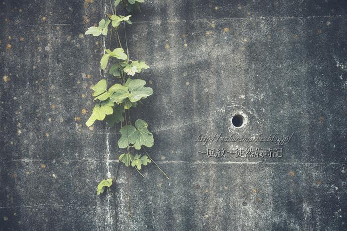深緑浸食。_f0235723_2094245.jpg