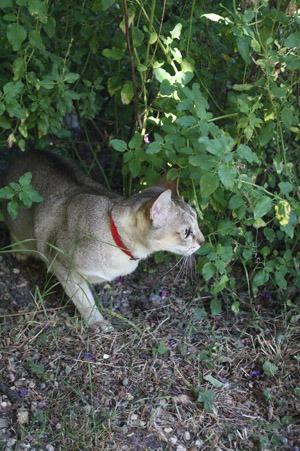猫とアーチビショップ公園で。_b0199526_192099.jpg