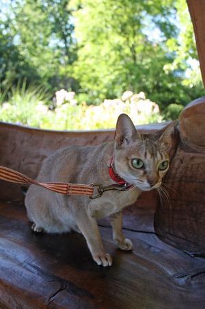 猫とアーチビショップ公園で。_b0199526_19463084.jpg