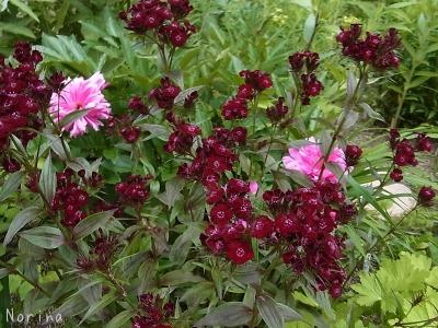 バラ以外の花も素敵だよ!_e0326953_22434855.jpg