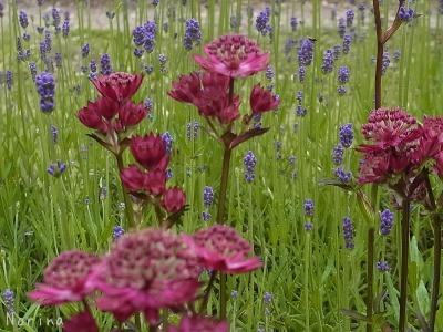 バラ以外の花も素敵だよ!_e0326953_22474444.jpg